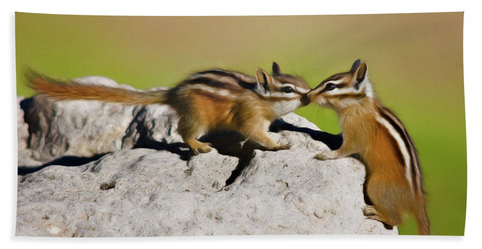 Animals Beach Towel featuring the photograph Chipmunk Love by Lana Trussell