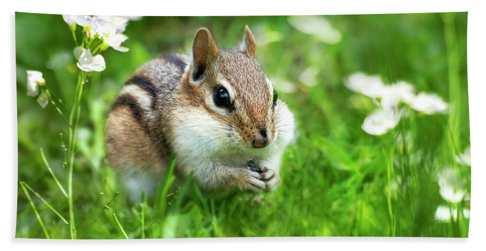 Chipmunk Beach Towel featuring the photograph Chipmunk Saving Seeds by Christina Rollo