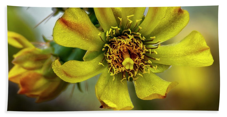 Cholla Beach Towel featuring the photograph Cholla Flower H1848 by Mark Myhaver