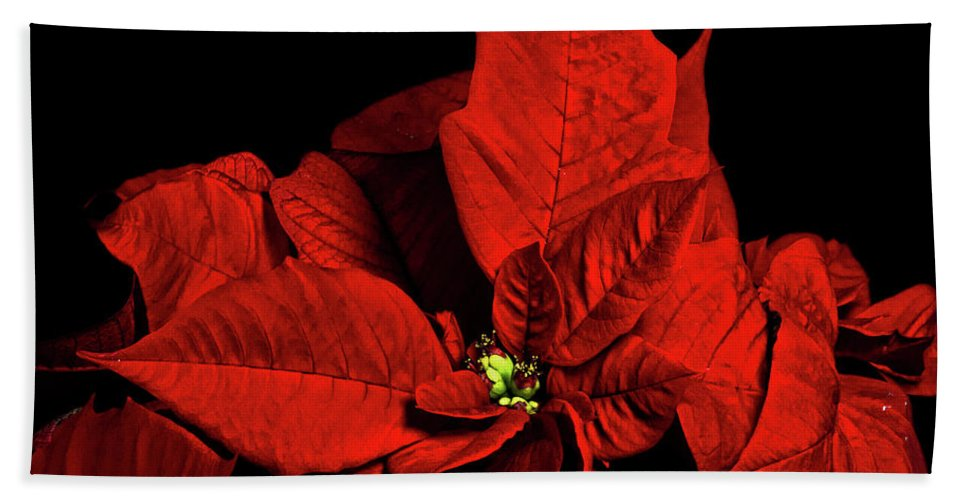 Pointsettia Beach Towel featuring the photograph Christmas Fire by Christopher Holmes