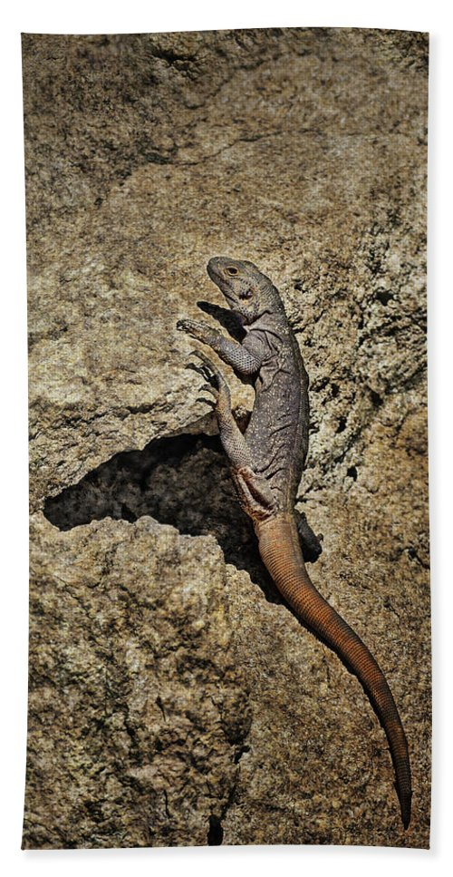 Lizard Beach Towel featuring the photograph Chuckwalla - Crevice by Nikolyn McDonald