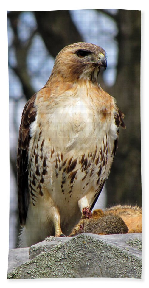 Hawk Beach Towel featuring the photograph Circle Of Life by September Stone