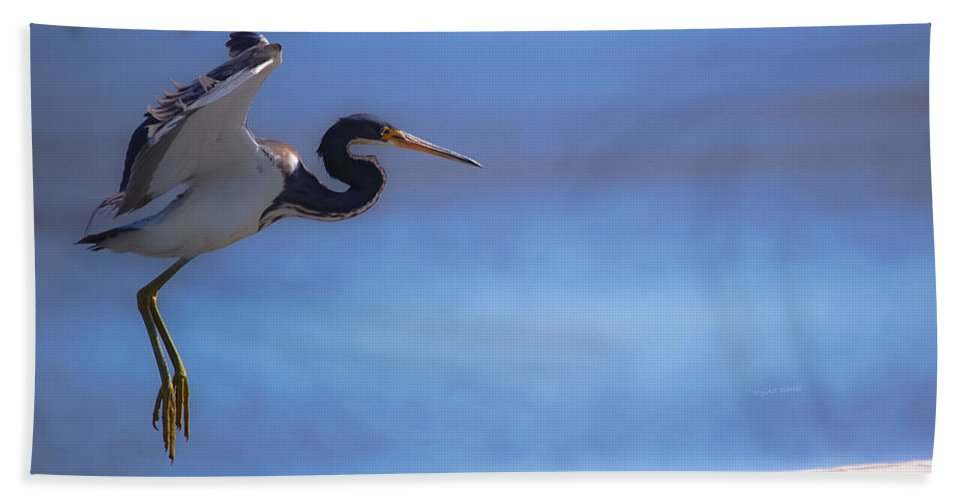 Bird Beach Towel featuring the digital art Cleared For Landing by DigiArt Diaries by Vicky B Fuller