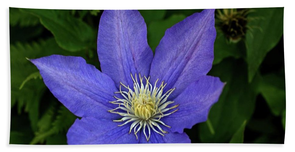 Flowers Beach Towel featuring the photograph Clematis by Sandy Keeton