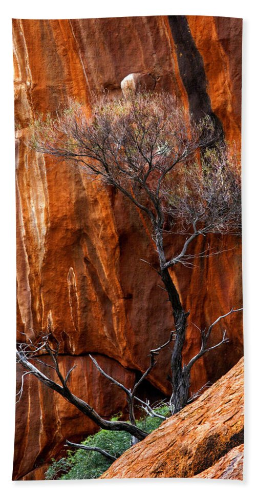 Ularu Beach Towel featuring the photograph Clinging To Life by Mike Dawson