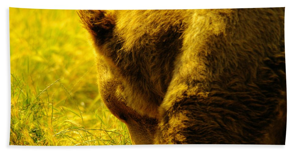 Bear Beach Towel featuring the photograph Close Up Of A Grizzily by Jeff Swan