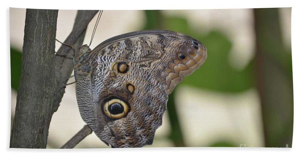 Blue Morpho Beach Towel featuring the photograph Close Up Of A Pretty Brown Morpho Butterfly by DejaVu Designs