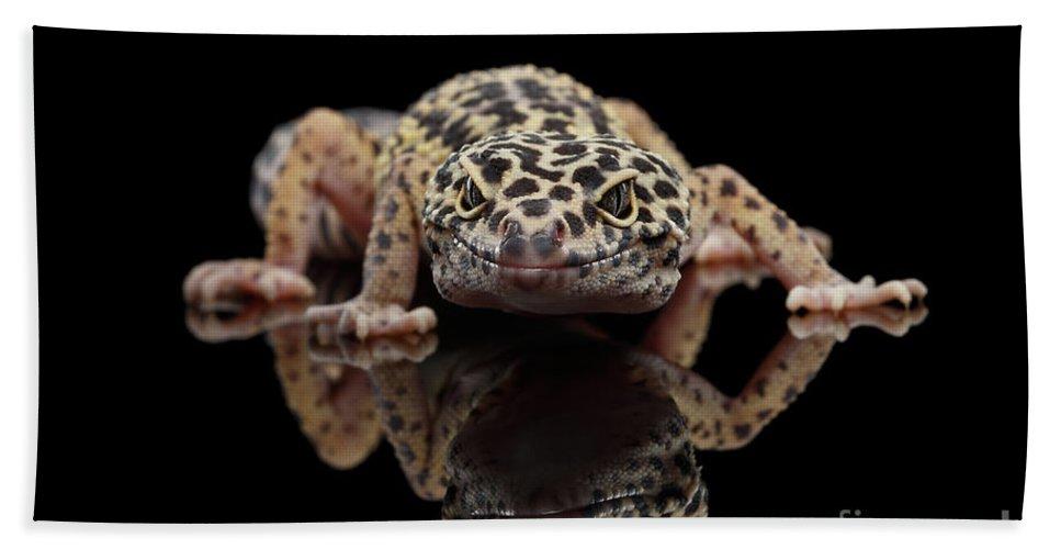 Closeup Leopard Gecko Eublepharis Macularius Isolated On Black Background 567c5b3c1