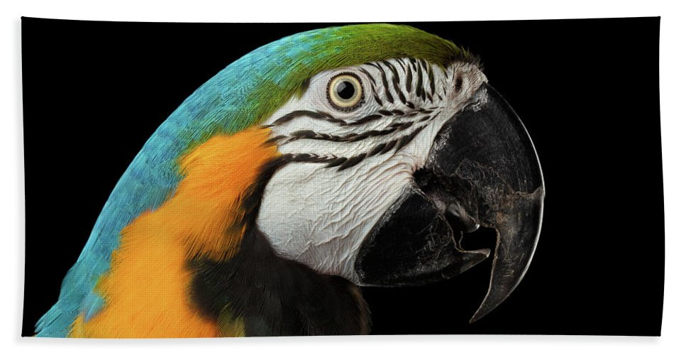 Macaw Beach Towel featuring the photograph Closeup Portrait Of A Blue And Yellow Macaw Parrot Face Isolated On Black Background by Sergey Taran