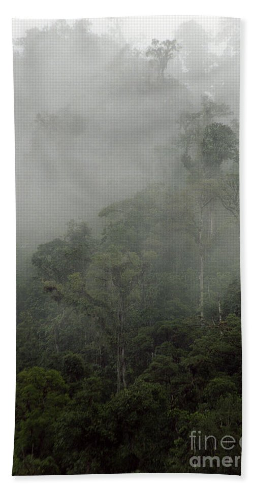 Rainforest Beach Sheet featuring the photograph Cloud Forest by Kathy McClure