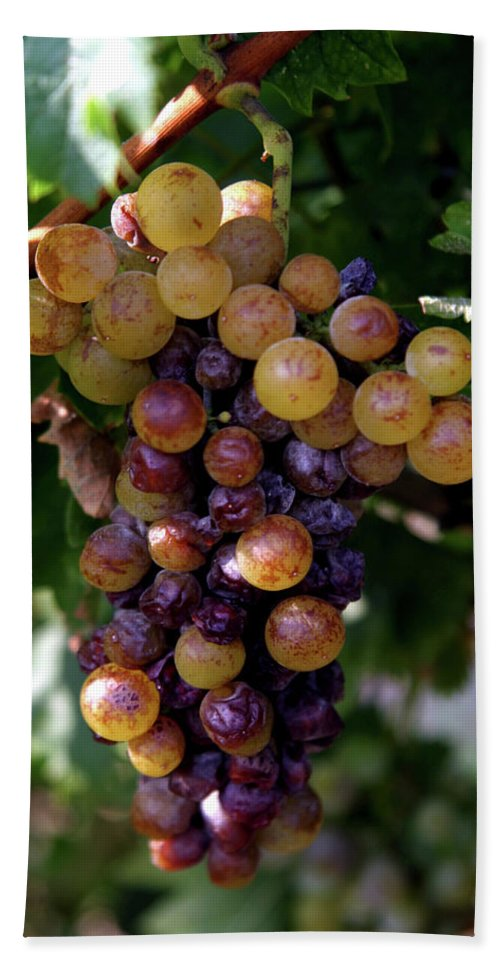 Grape Beach Towel featuring the photograph Cluster Of Ripe Grapes by Amos Dor