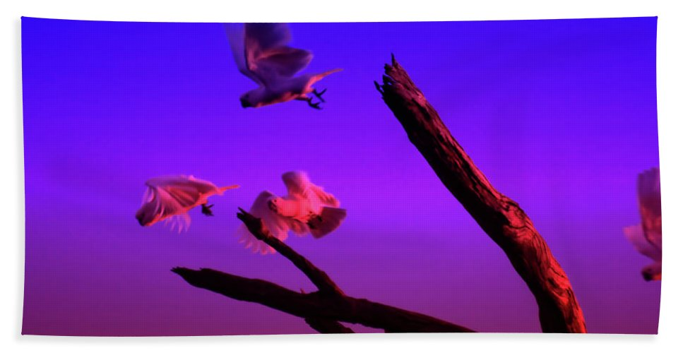 Cockatoos Beach Towel featuring the photograph Cockatoos In The Twilight by Douglas Barnard