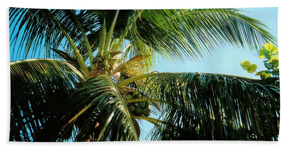 Jamaica Beach Towel featuring the photograph Coconut Tree by Debbie Levene