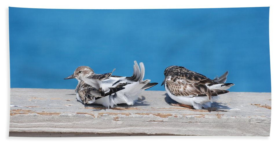 Bird Beach Towel featuring the photograph Cold Birds by Rob Hans