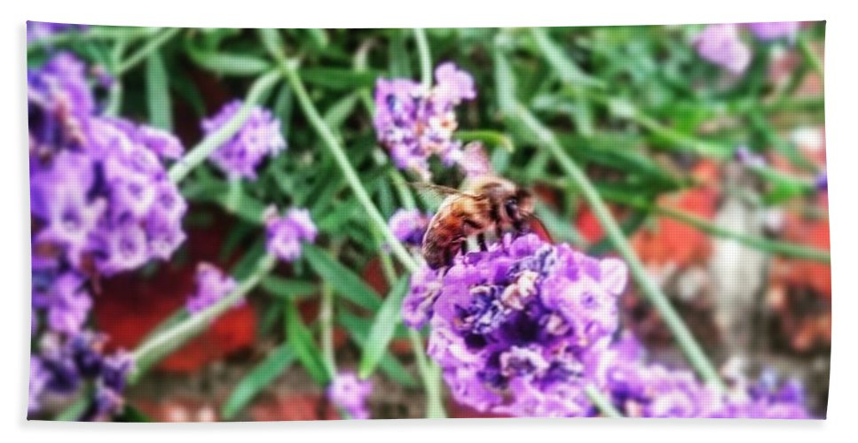 Honey Bee Beach Towel featuring the photograph Collecting The Honey by Gabriella Szekely