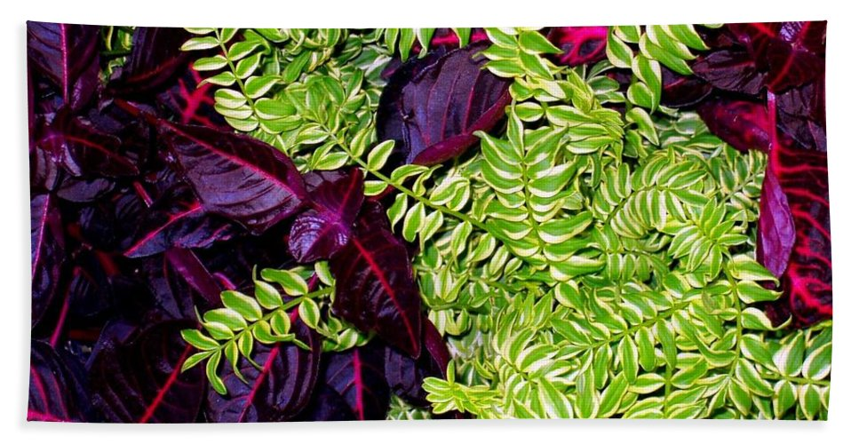 Plants Beach Towel featuring the photograph Color Combo by Deborah Crew-Johnson