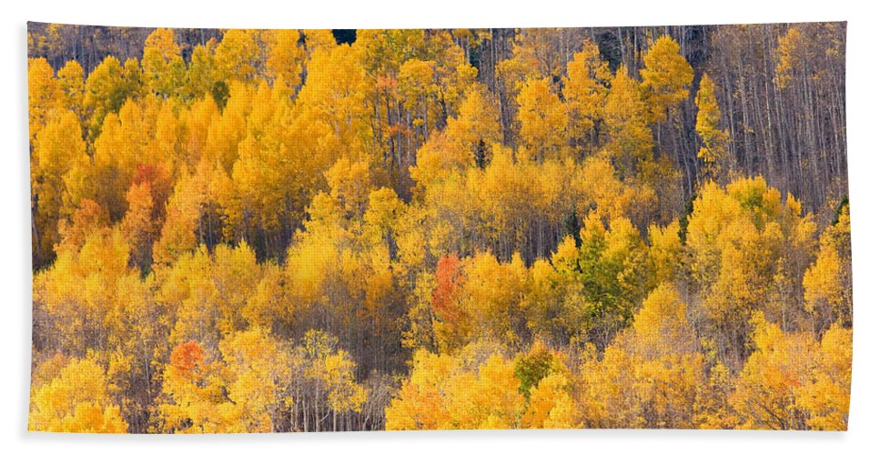 Trees Beach Towel featuring the photograph Colorado High Country Autumn Colors by James BO Insogna