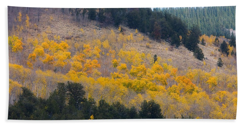 Trees Beach Towel featuring the photograph Colorado Mountain Aspen Autumn View by James BO Insogna