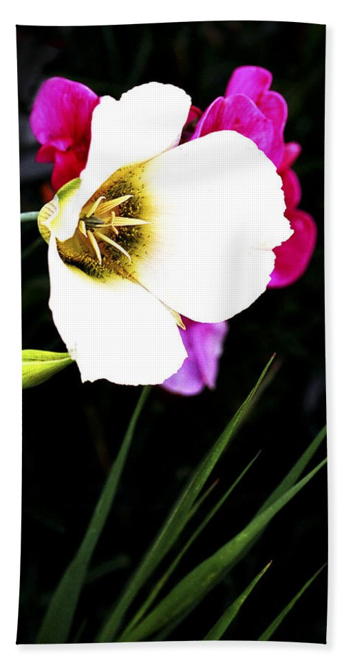 Wildflower Beach Towel featuring the photograph Colorado Wildflower1 by Marilyn Hunt