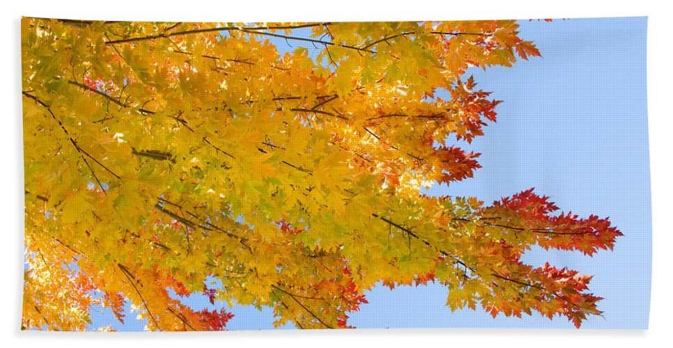 Branches Beach Towel featuring the photograph Colorful Autumn Reaching Out by James BO Insogna