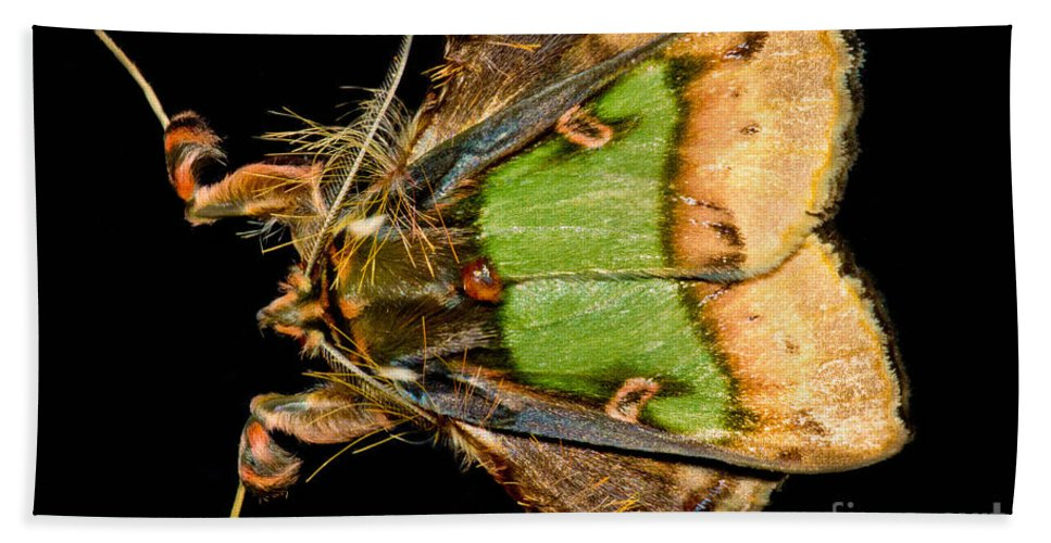 Noctuoidea Beach Towel featuring the photograph Colorful Cryptic Moth by Dant� Fenolio