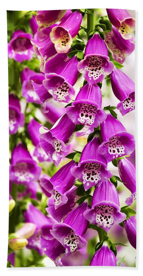 Foxglove Beach Towel featuring the photograph Colorful Foxglove Flowers by Christina Rollo