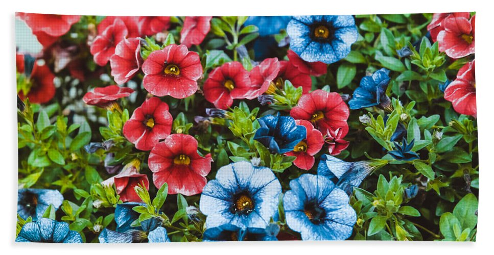 Summer Floral Beach Towel featuring the photograph Colorful Petunias 2 by Claudia M Photography