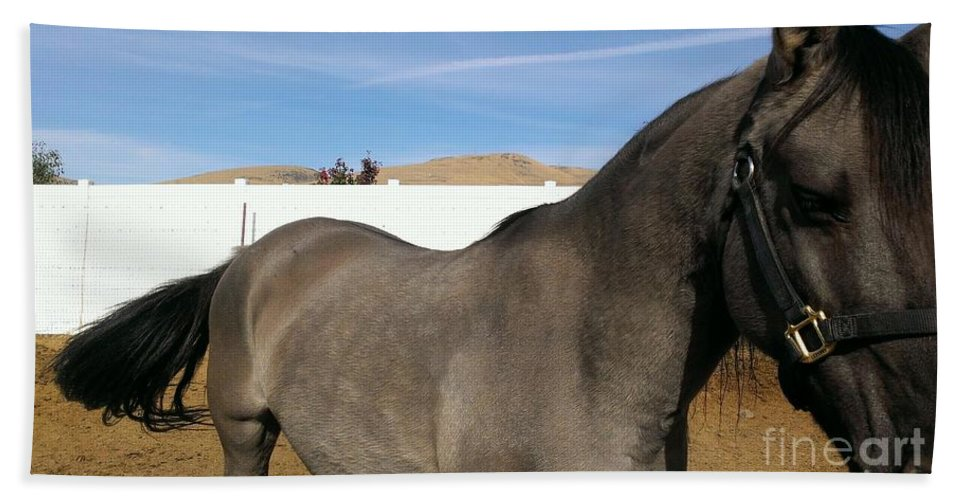 Horse Beach Towel featuring the photograph Colors Of Beauty by LKB Art and Photography