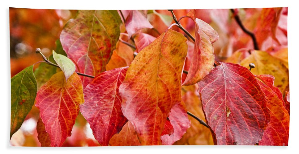 Colors Beach Towel featuring the photograph Colors Of Fall by Terry Anderson