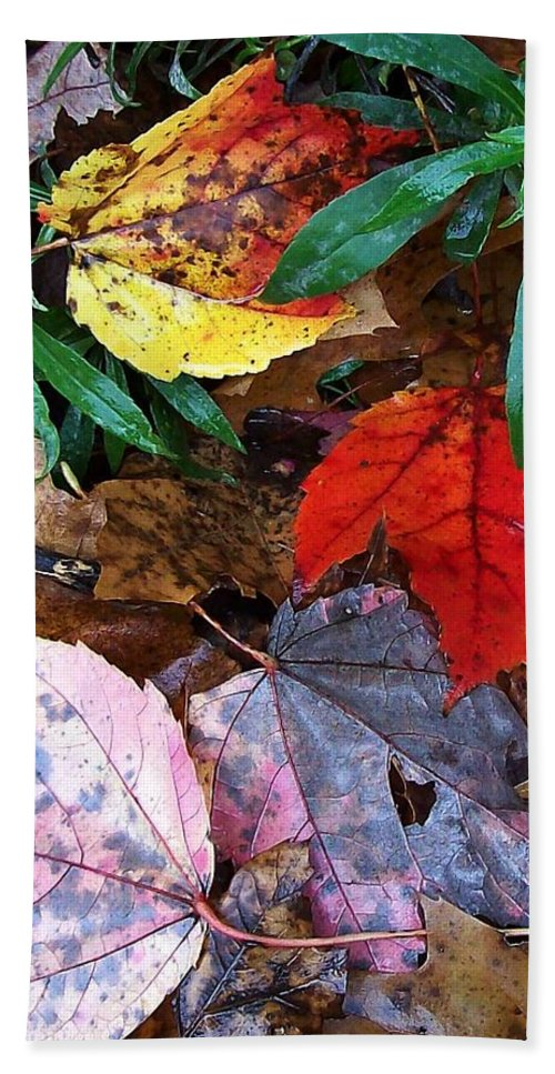 Fall Leaf Color Beach Towel featuring the photograph Colors Of The Fall by Wolfgang Schweizer