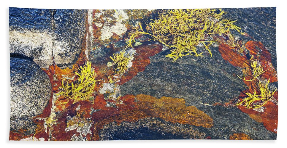 Lichen Beach Towel featuring the photograph Colors On Rock II by Heiko Koehrer-Wagner