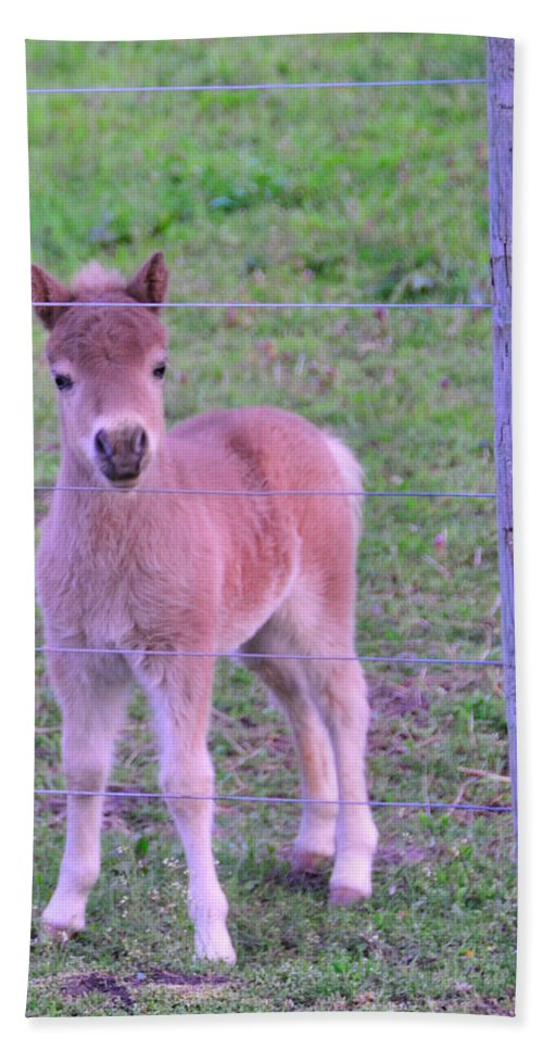 Young Animals Beach Towel featuring the photograph Colt Pony by David Arment