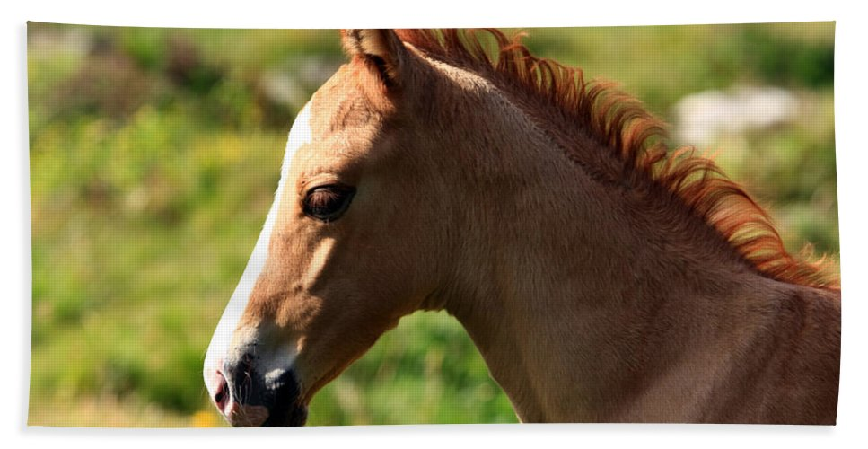 Horse Beach Towel featuring the photograph Colt Portrait by Aidan Moran