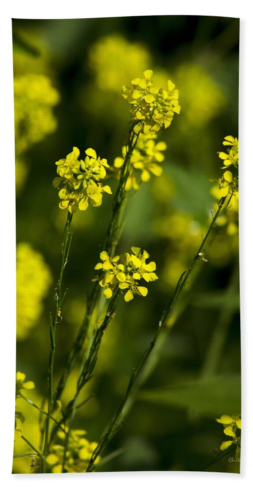 Flowers Beach Towel featuring the photograph Common Wintercress Flowers by Christina Rollo