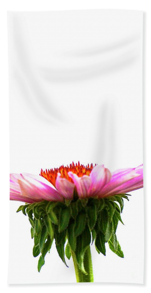 Single Beach Towel featuring the photograph Cone Flower by Traci Cottingham