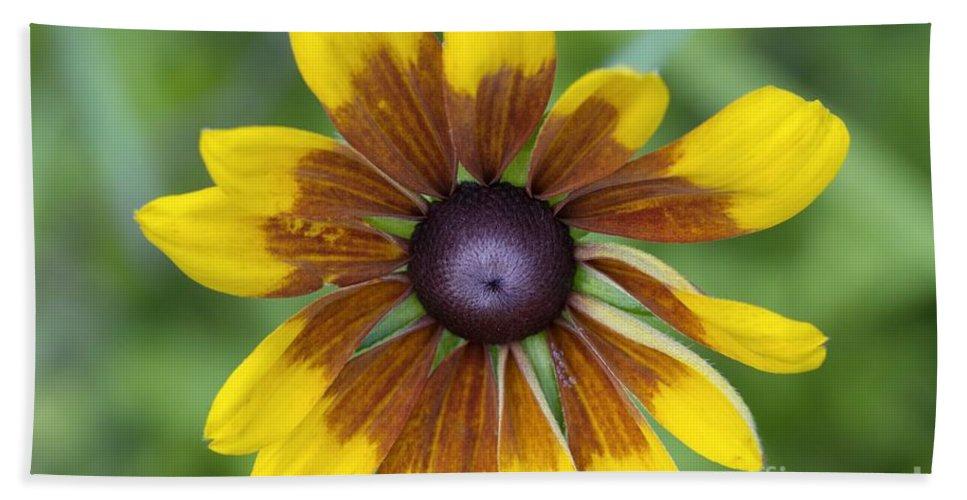 New England Beach Sheet featuring the photograph Coneflower - New England Wild Flower by Erin Paul Donovan