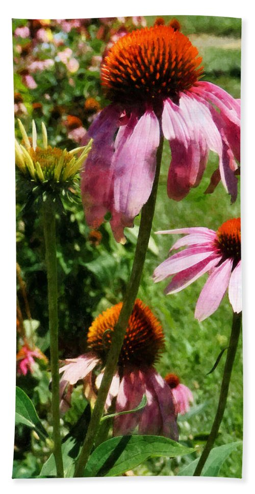 Coneflower Beach Towel featuring the photograph Coneflowers In Garden by Susan Savad