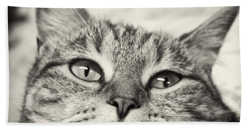 Cat Beach Towel featuring the photograph Content by Scott Wyatt