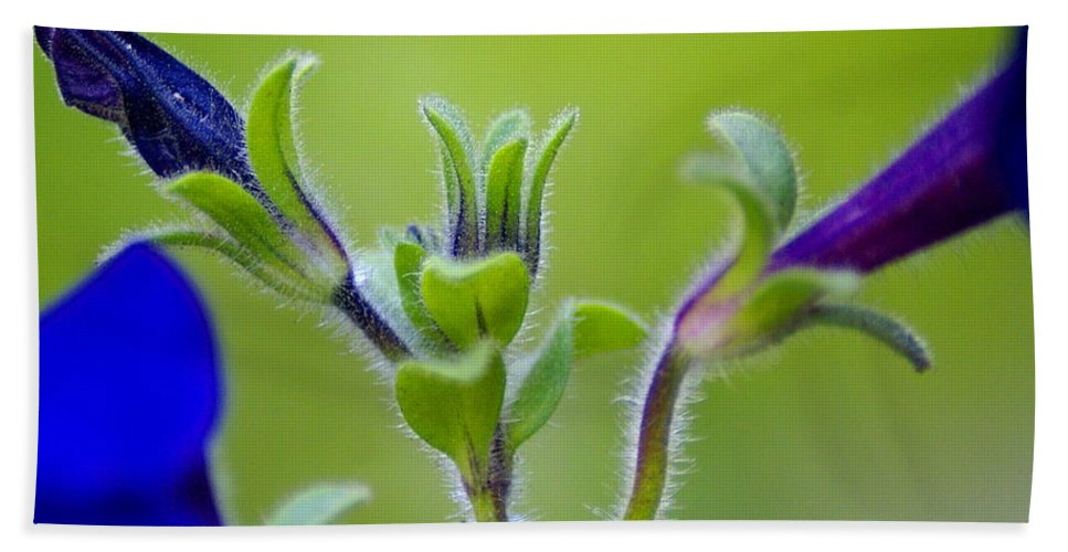 Flowers Beach Towel featuring the photograph Cool Blue Fuzzy Feeling by Ben Upham III