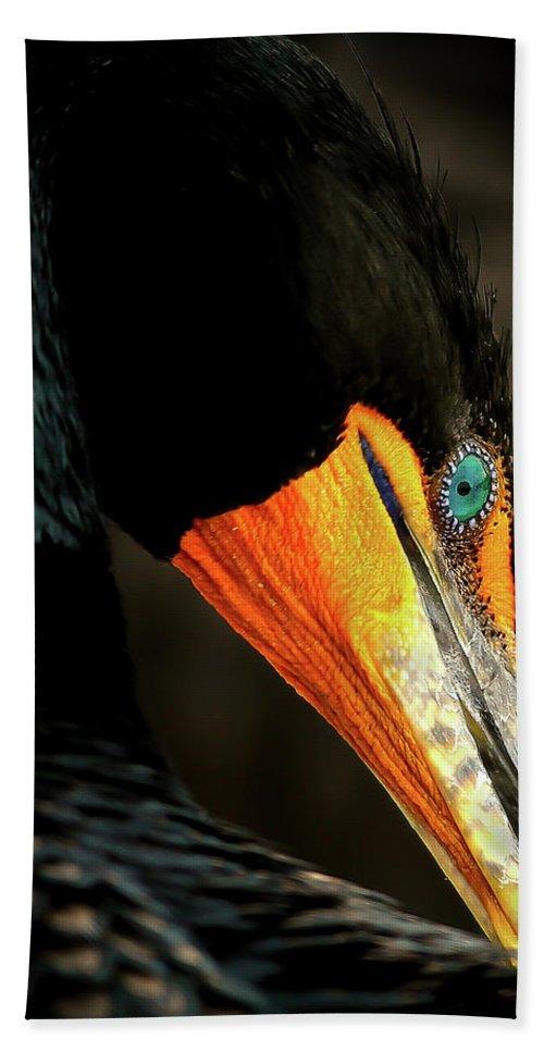 Cormorant Beach Towel featuring the photograph Cormorant by Dennis Goodman