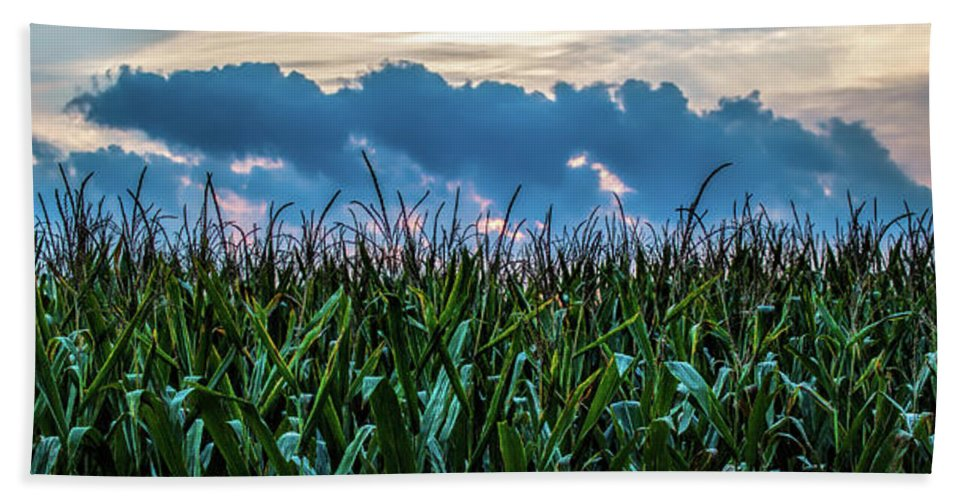 Corn Beach Towel featuring the photograph Corn And Clouds Panorama by Edward Moorhead