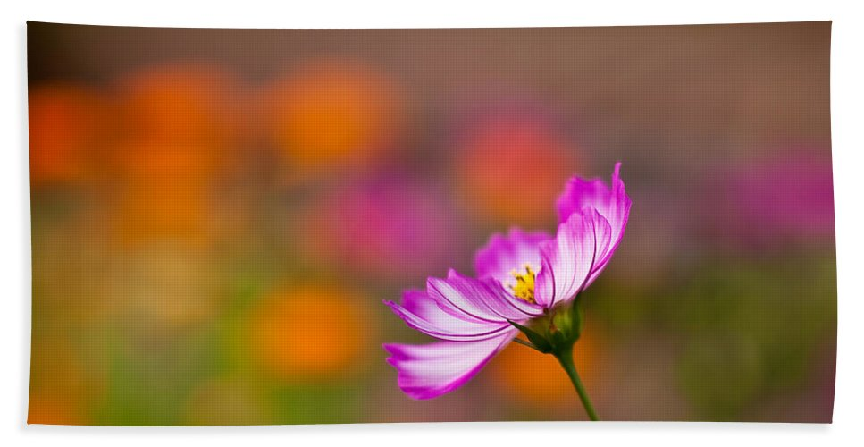 Cosmo Beach Towel featuring the photograph Cosmo Solo by Mike Reid