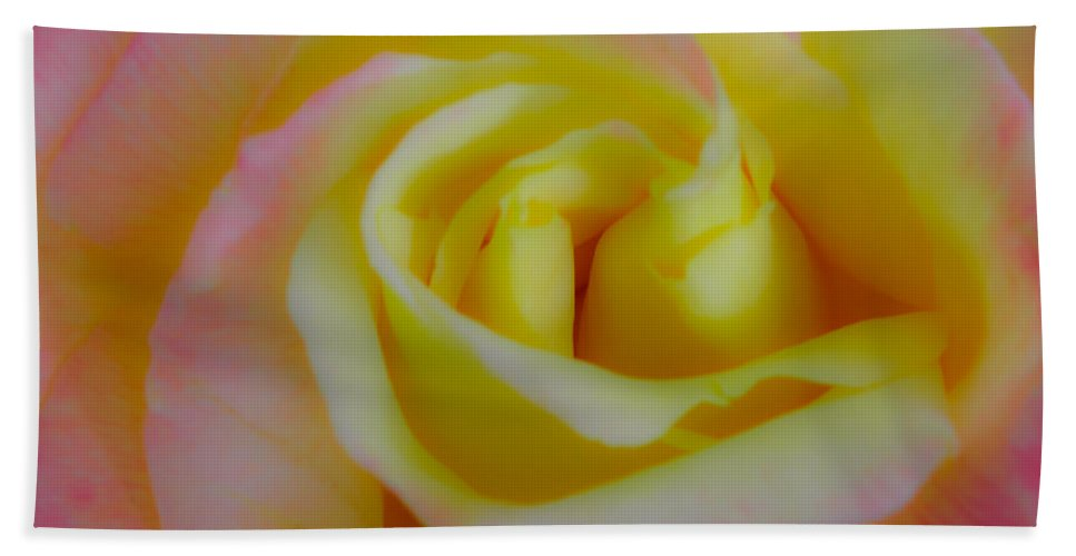 Rose Beach Towel featuring the photograph Cotton Candy Roses by Stephen Settles