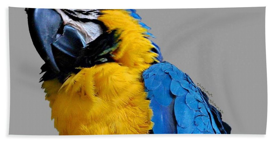 Macaw Beach Towel featuring the photograph Could I Look Any Better by DigiArt Diaries by Vicky B Fuller