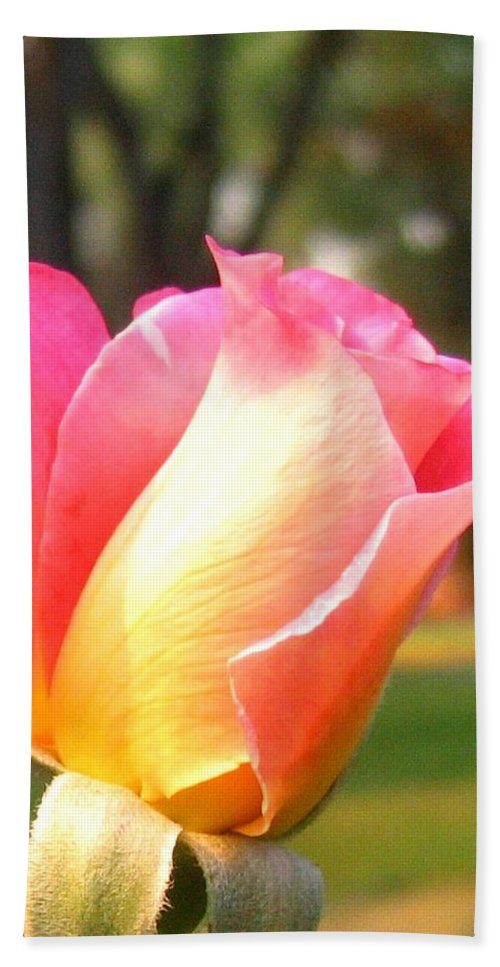 Rose Beach Towel featuring the photograph Country Rose by Will Borden