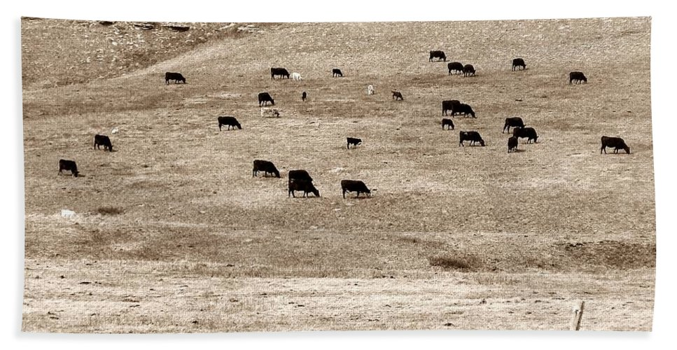 Cows Beach Towel featuring the photograph Cow Droppings by Susan Kinney