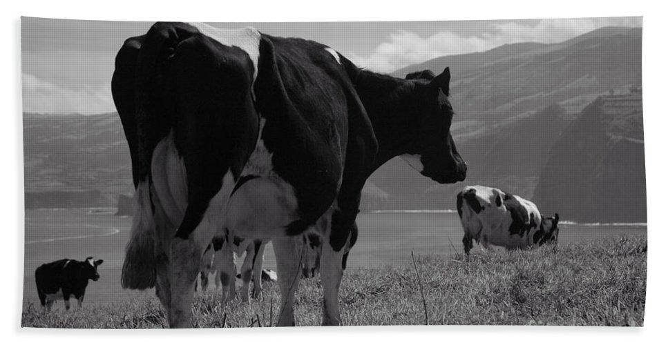 Azoren Beach Towel featuring the photograph Cows by Gaspar Avila