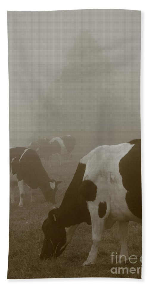 Animals Beach Sheet featuring the photograph Cows In The Mist by Gaspar Avila
