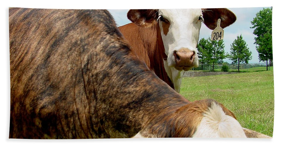 Cow Beach Towel featuring the photograph Cows8938 by Gary Gingrich Galleries