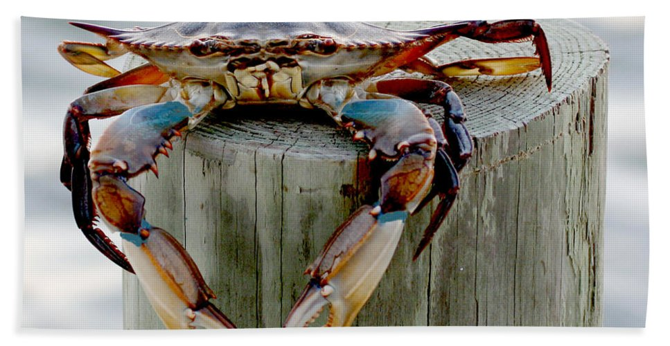 Crab Photography Beach Towel featuring the photograph Crab Hanging Out by Luana K Perez